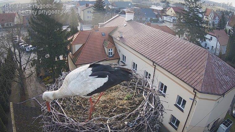 źródło: screen/http://www.bociany.przygodzice.pl/